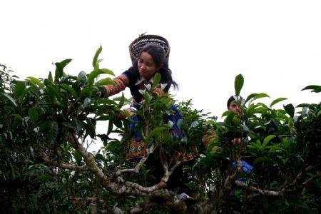 thieu_nu_Hmong_hai_che