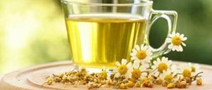 Công dụng của trà hoa cúc